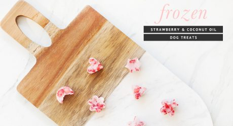 Dog-I-Y: Easy Frozen Strawberry & Coconut Dog Treats