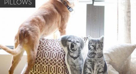 DOG-I-Y: Custom DIY Pet Pillows