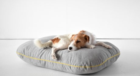 Modern Dog Beds from Doca Pet