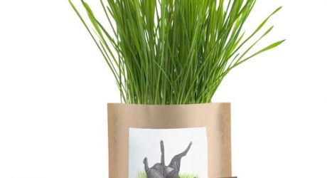 Garden In A Bag: Dog Grass