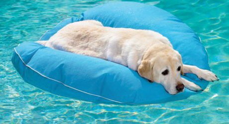 Pet Floats