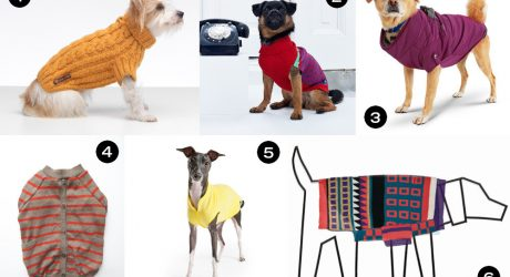 Dog Milk Holiday Gift Guide: Stylish Coats, Jackets, and Sweaters for Dogs