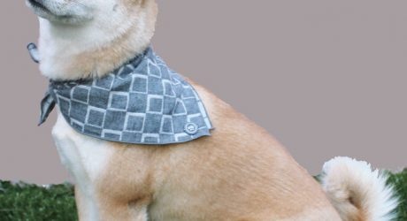 Dog Bandanas from Max Bone