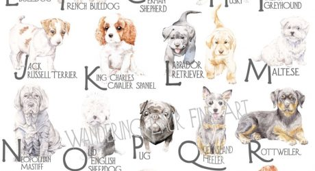 ABC Dog Breed Alphabet Poster from Lauren Rogoff