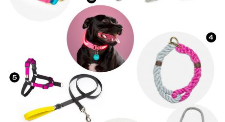 Dog Milk Holiday Gift Guide: 24 Stylish Collars, Leashes, and Harnesses
