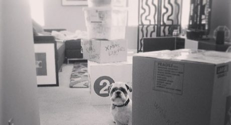 Bark Out Loud: Helping Your Dog Adjust During a Move