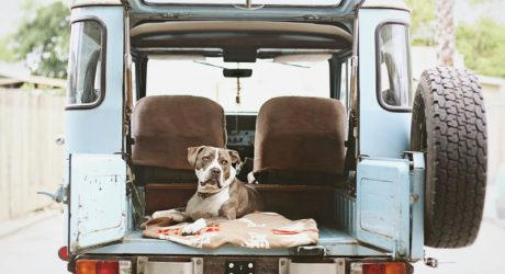 Dog Photography by Ashley Randall
