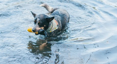 Dog Pop Fetch Toy from Wildebeest
