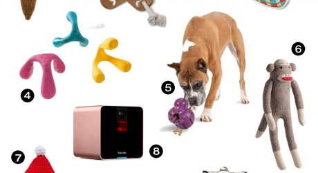 Dog Milk Holiday Gift Guide: 12 Cool Toys for Dogs