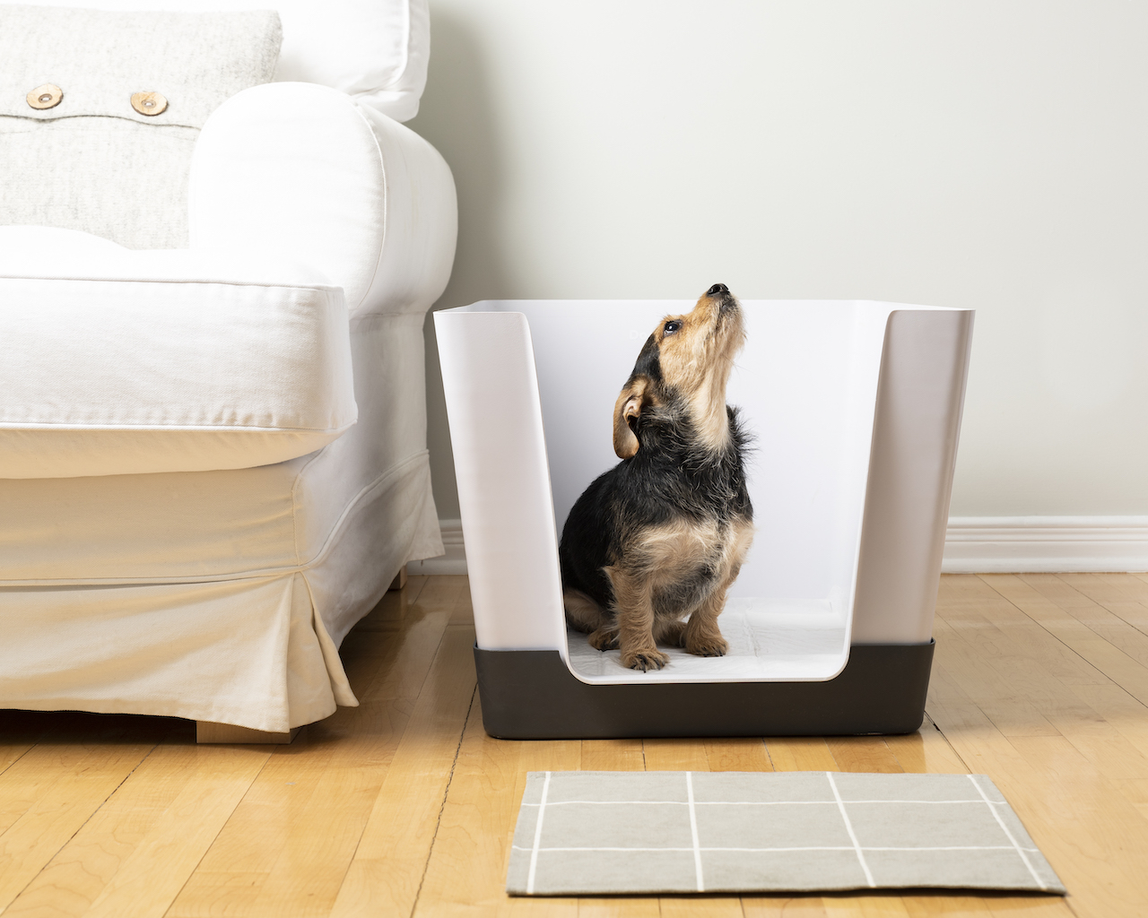 Doggy Bathroom: An Indoor Potty Solution for Small Dogs