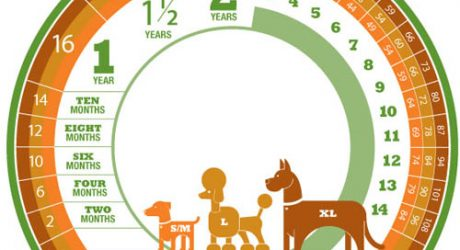 How to Calculate a Dog's Age in Dog Years