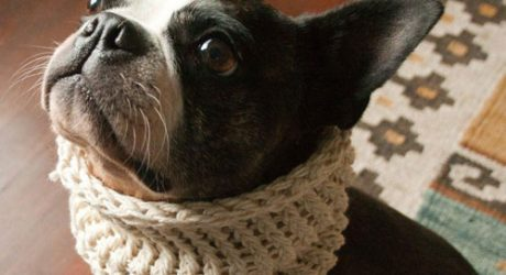 Earth Walkers Dog Cowls