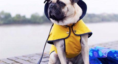 Stylish Waterproof Jackets from Fetch & Follow