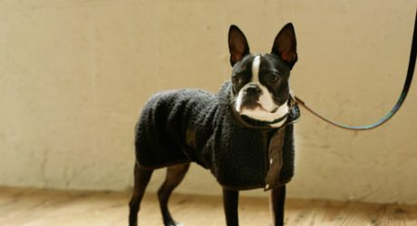 2012 Year in Review: Best of Clothes, Collars, and Leashes