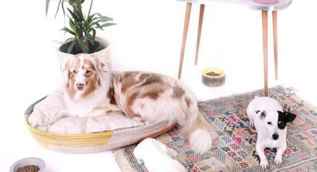 Modern Pet Beds and Bowls from FUL[L] Animaux Urbains