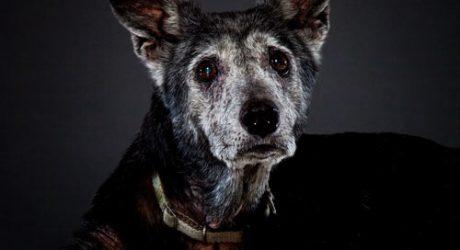 Garry Gross Dog Photography