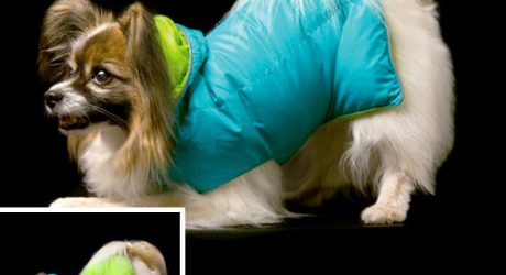 Goose Down Hooded Coat by Joy Pet Products