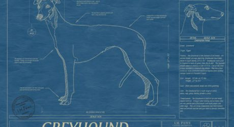 Animal Blueprint Company