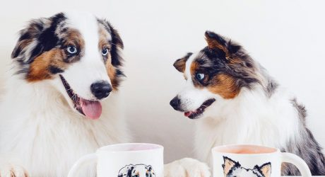 Custom Pet Portrait Mugs from Hadley Clay Studio