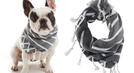 Modern Dog Accessories from iL CANE