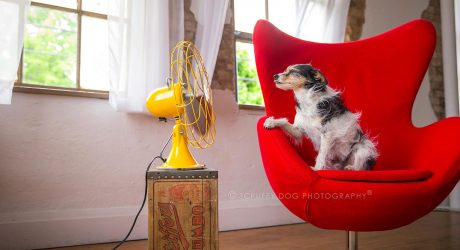 <i>BLOW</i> Photo Series from Illona Haus of Scruffy Dog Photography
