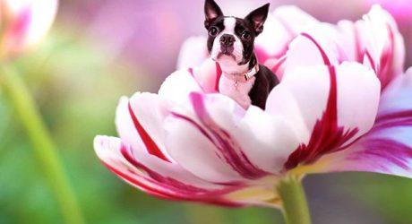 Instagram Love: Dogs in Flowers