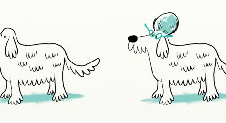 Dog Illustrations by Jared Chapman