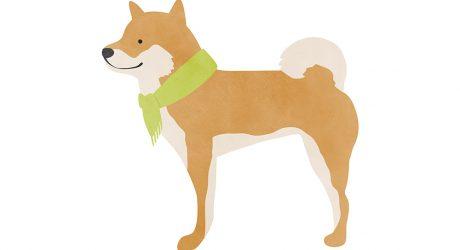 Dog Illustrations by Jen Ha