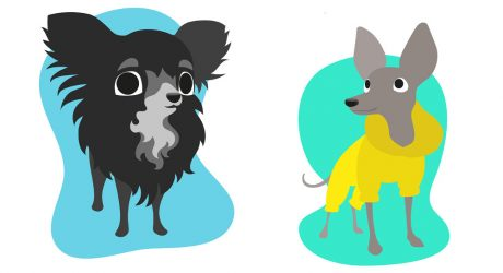 Modern Cartoon-Style Pet Portraits from Erual Alekruk