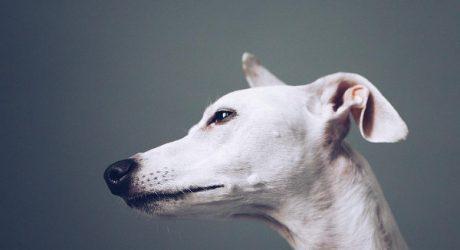 Dog Photography by Kristen Turick