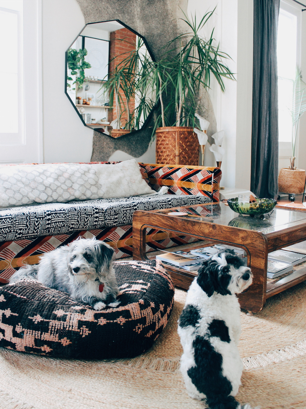 Spotted: Two Boho Pups in New Orleans