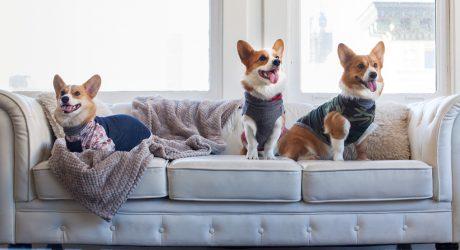 Stylish Dog Apparel from Long Dog Clothing