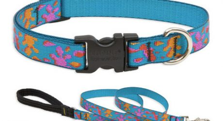 Lupine Wet Paint Collar and Lead