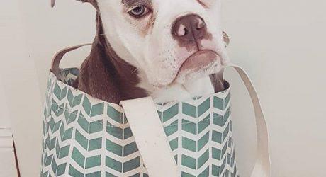 Instagram Love: Madame Eyebrows