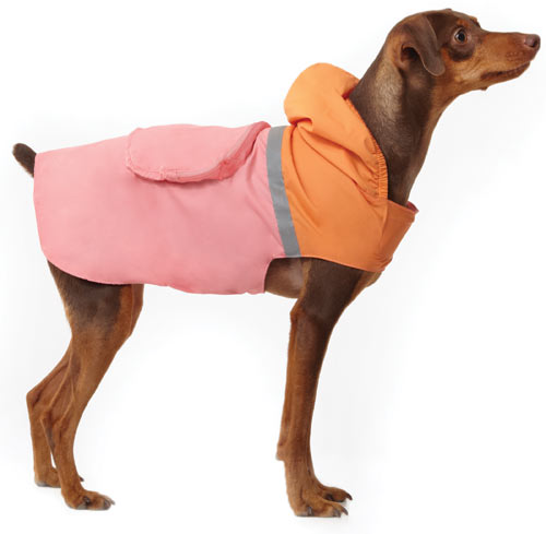 Martha Stewart Pets for Spring