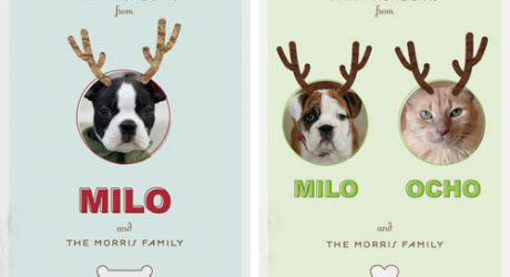 Holiday Pet Cards From Minted