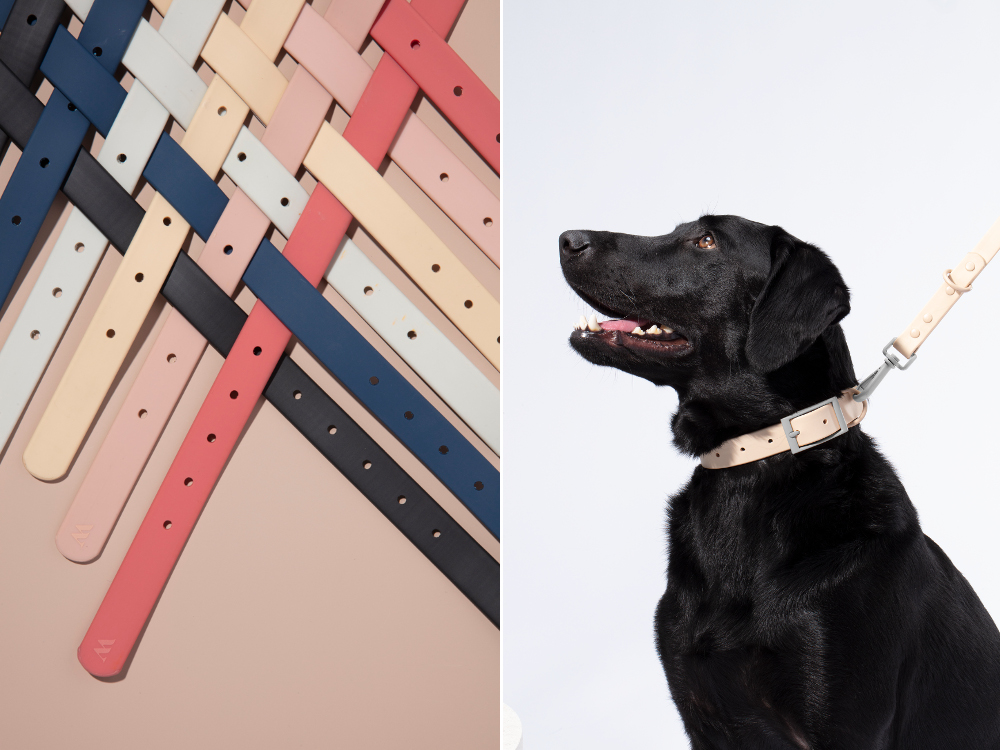 Stylish Pet Essentials from Wild One