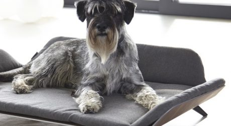 Bauhaus-Inspired Dog Accessories from MiaCara