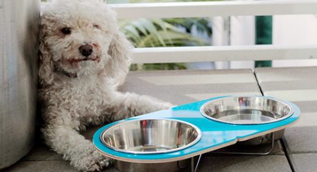 Modern Elevated Pet Feeders by Drip Module