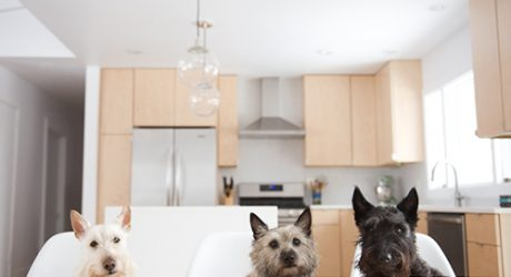 Spotted: Three Little Terriers — and a Modern Kitchen Makeover