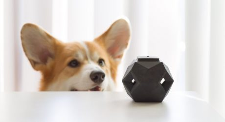 The Odin: A Modern Puzzle Toy for Dogs