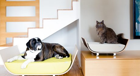 Modern Dog Beds by MaxPet