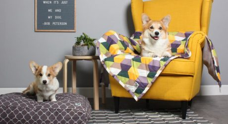 Canvas Pet Blankets from Molly Mutt