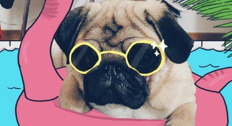 Instagram Love: Mr. Georges the Doodle Pug