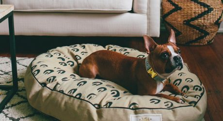 Fais-do-do Dog Beds from See Scout Sleep