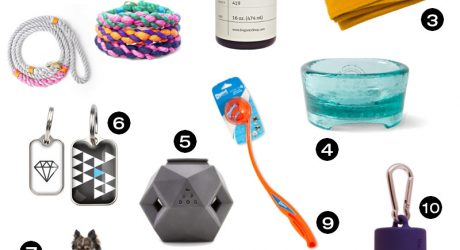 10 Great Gifts for the New Dog in Your Life