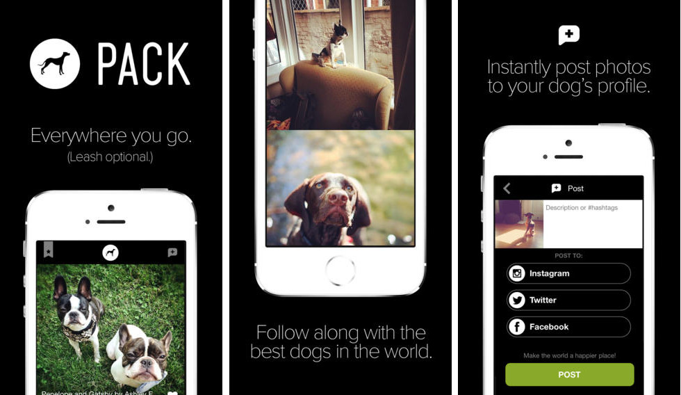 Pack: The Social Network for Dog Lovers