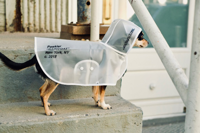 Dog Raincoats from Pawkier