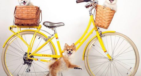 Spotted: Paws & Pedals Tumblr from Public Bikes