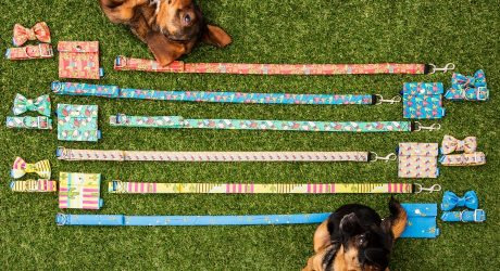 Colorful Leashes, Collars, and Bag Holders from Pepito&Co.